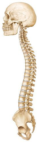 spinal_integration